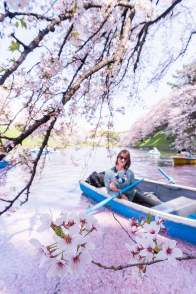 Rosa Fluss mit Kirschblüte und blauem Boot in Chidorigafuchi Tokio