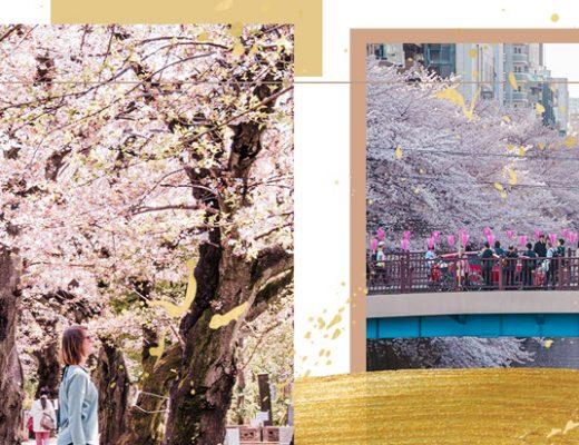 Tokio Kirschblüte - Artikel Header