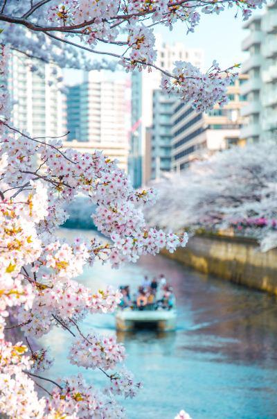 Boot auf Meguro Fluss mit Kirschblüten umrahmt