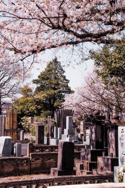 Grabsteine auf dem Yanaka Friedhof zur Kirschblüte in Tokio