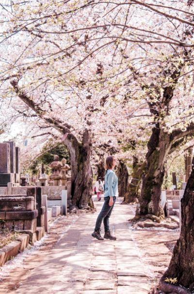 Yanaka Friedhof während der Kirschblüte