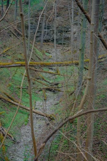 ausgetrockneter Bach in Wald