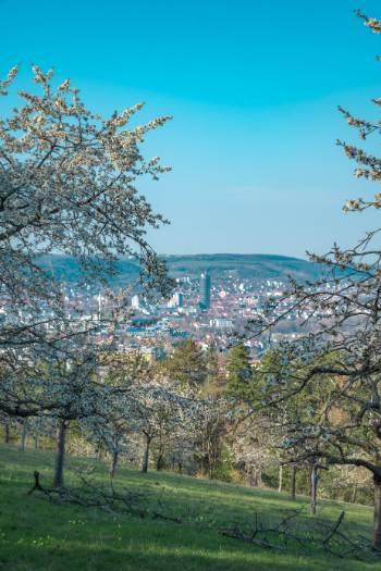Ausblick zum Jenaer Turm von Winzerlas Kirschplantage