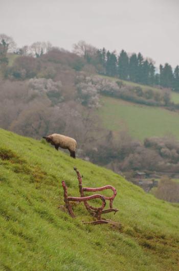 Schaf auf den Hügeln über Ashburton in Devon
