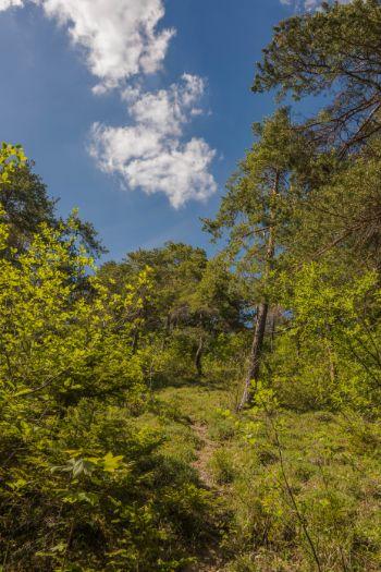 grüne Wiesen in Kochberg im Frühling