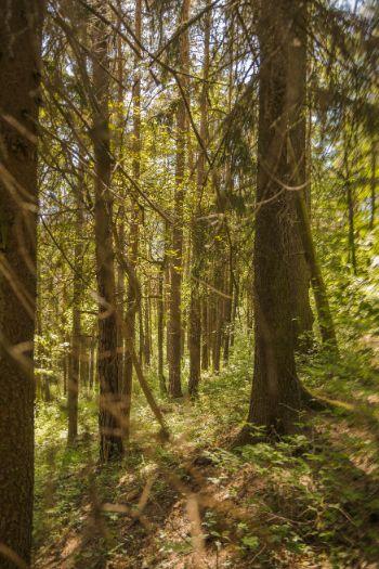 Wald in Kochberg im Frühling