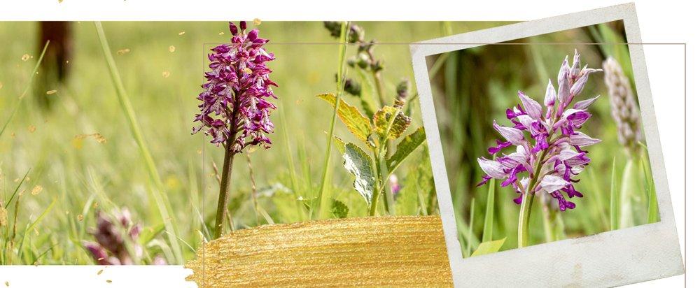 Header: So geht's zu den Orchideen im Leutratal bei Jena