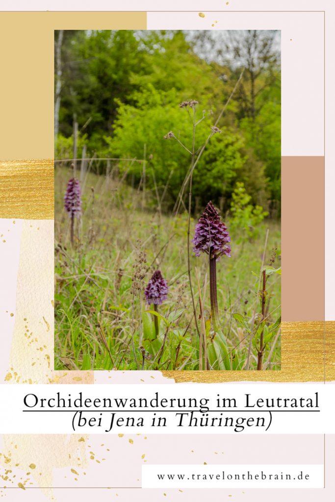 Pin: So geht's zu den Orchideen im Leutratal bei Jena