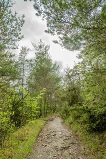 von Bäumen umringter Weg durch das Leutratal
