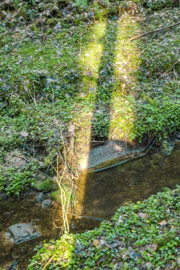 Sonnenstrahlen auf Bach im Wald bei Stadtroda
