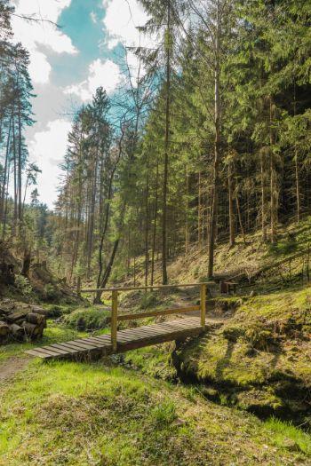 Brücke über Bach in Waldlichtung