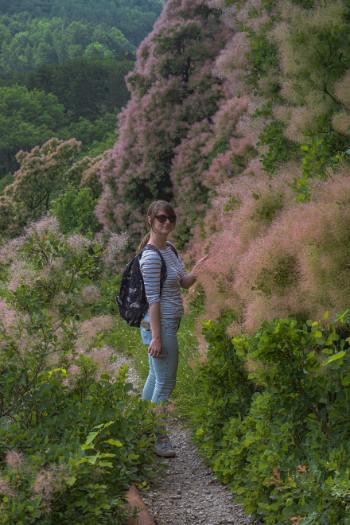 Frau inmitten blühender Perückensträucher in Jena